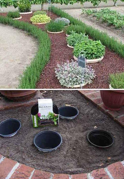 plantes pot enterre
