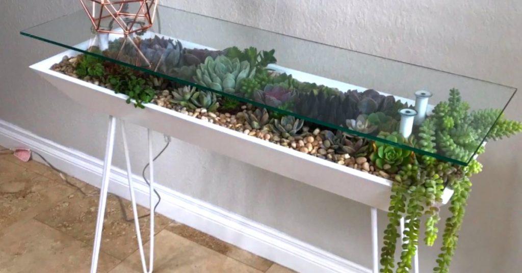table terrarium plantes succulentes