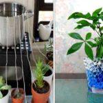 7 Astuces pour prendre soin de ses plantes avant de partir en voyage