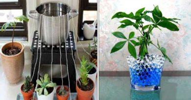 astuces plantes voyage