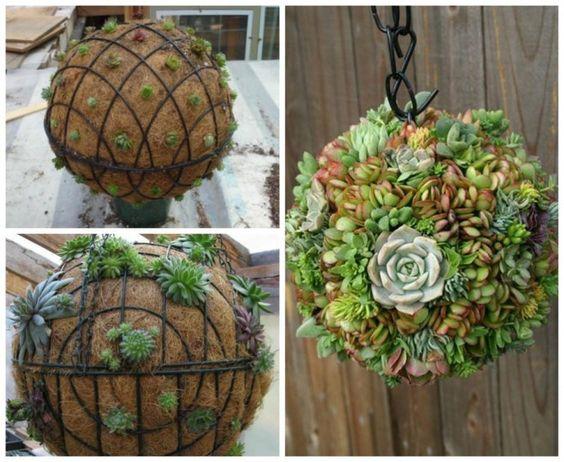 boules suspendus plantes grasses