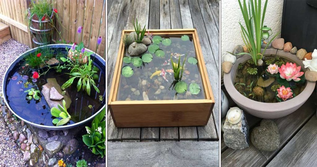 choix plantes aquatiques