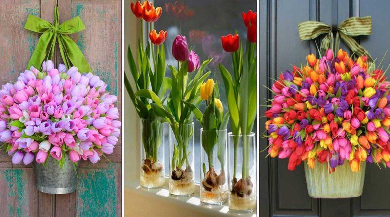 culture tulipe