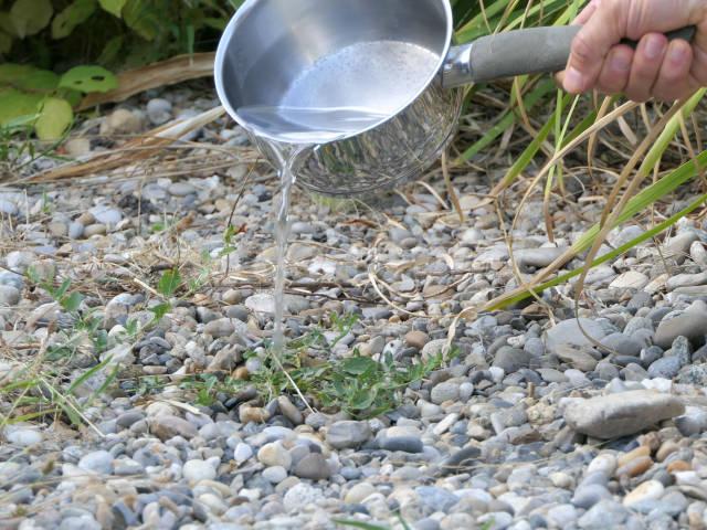 eau cuisson pomme de terre