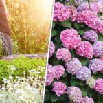 Tout sur le jardinage au mois d'août