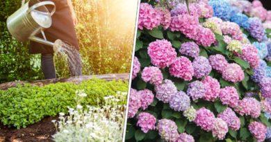 jardinage mois aout
