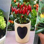 Liste des fruits et des légumes qu'on peut cultiver facilement en pots