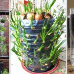 Créez votre potager vertical en recyclant les bouteilles en plastique