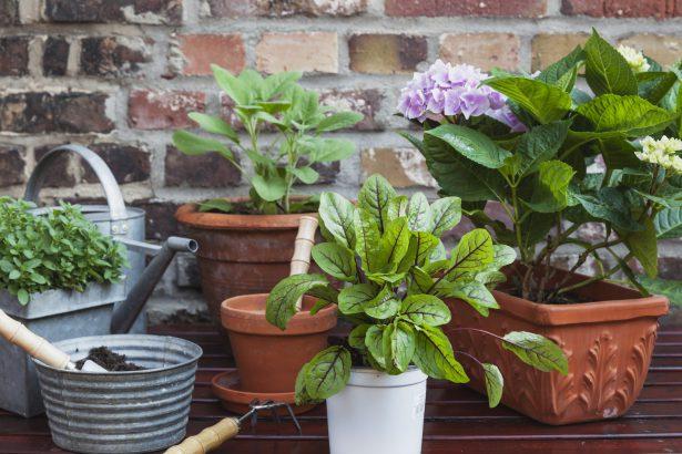 rassembler plantes