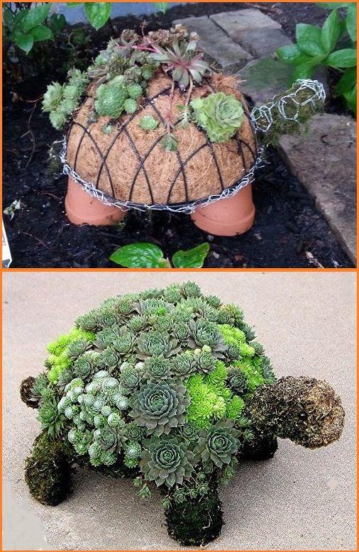 tortue plante grasse