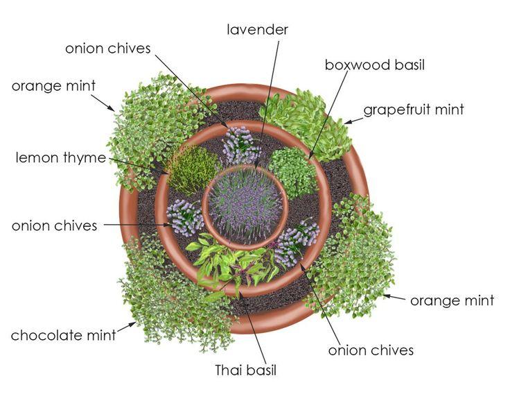 choix plante spirale aromatique