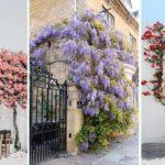 Adopter l'originalité d'orner un mur par de la végétation