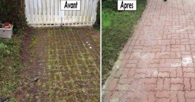 eliminer mousse jardin