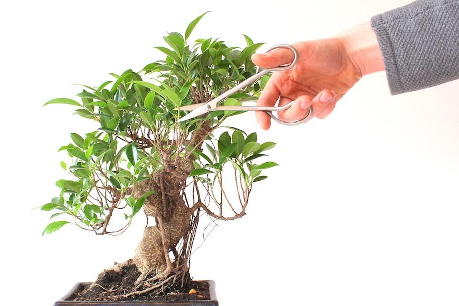 taille bonsai