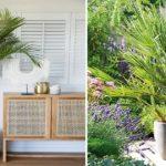 Les opérations à réaliser pour cultiver et maintenir une bonne croissance à ses palmiers