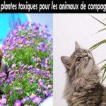 Méfiez-vous de ces plantes ! Elles sont toxiques pour votre animal de compagnie