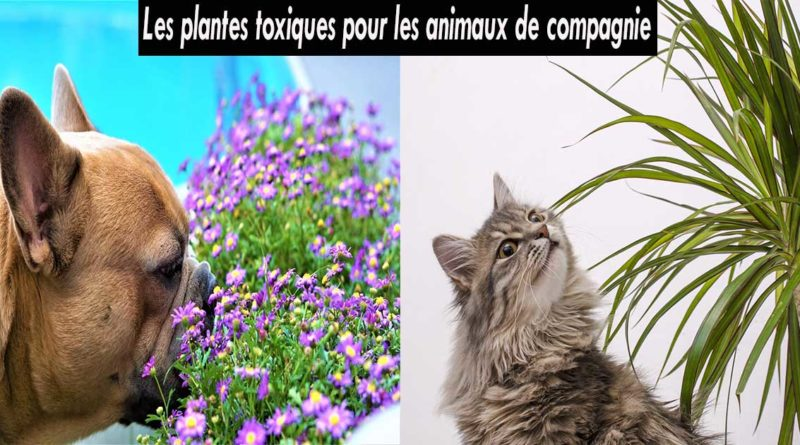 plantes toxiques animaux