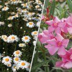 Important ! Découvrez les plantes et les fleurs toxiques pour les enfants
