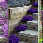Décorer ses escaliers avec des plantes vivaces et des arbustes