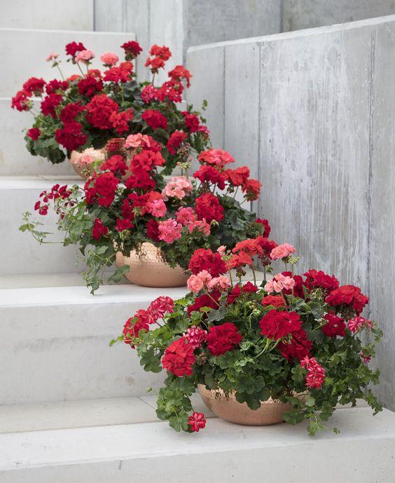 deco geranium