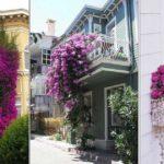 Quelles fleurs planter sur ses fenêtres et son balcon ?