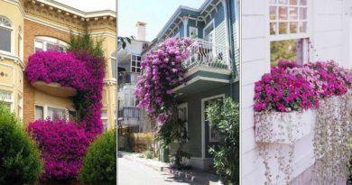 decoration fenetre fleurs