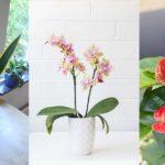 5 plantes pour purifier l'air à la maison